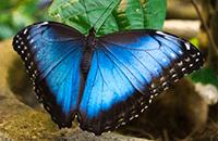 Ver Fotos de Costa Rica